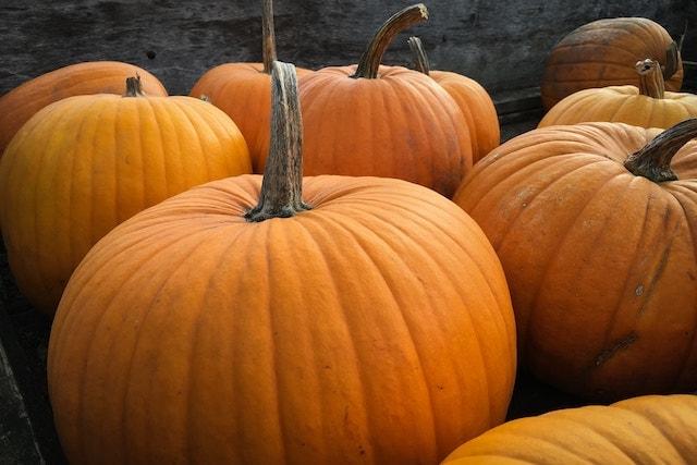 lots of pumpkins.